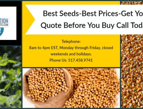 We Offer The Best Corn Seed With The Best Prices