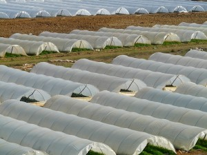 Weed barrier and mulch film for field greenhouses